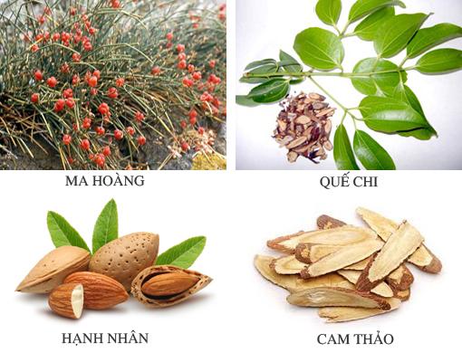 Bài thuốc Ma Hoàng Thang chữa hen suyễn